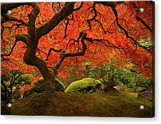 Magical Tree Acrylic Print by Bjorn Burton