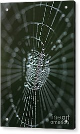 Magical Web Acrylic Print by Rebeka Dove
