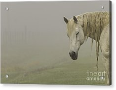 Magical White Horse Acrylic Print by Cindy Bryant