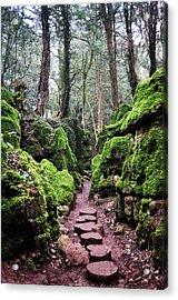Magic's Pathway Acrylic Print by Tara Hall