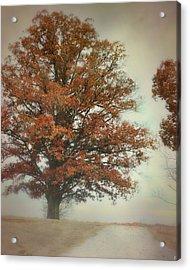 Magnificence - Foggy Autumn Scene Acrylic Print by Jai Johnson