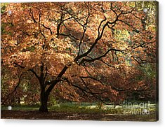 Magnificent Autumn Acrylic Print by Anne Gilbert