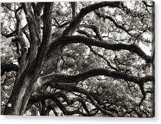 Magnificent Oaks Of Louisiana Acrylic Print