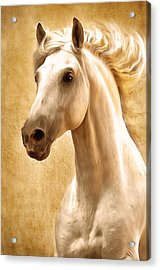 Magnificent Presence Horse Painting Acrylic Print by Georgiana Romanovna