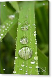 Acrylic Print featuring the photograph Magnifying  by Agnieszka Ledwon