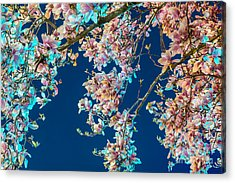 Magnolia-greenlight Acrylic Print by Susan Cole Kelly Impressions
