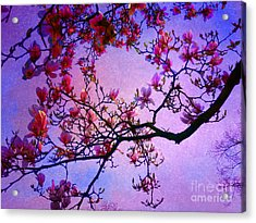 Magnolia #2 Acrylic Print by Angela Bruno
