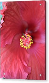 Magnolia 5  Acrylic Print