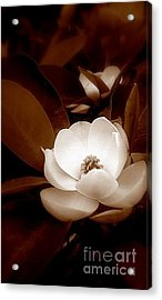 New Orleans Magnolia Beauty Acrylic Print by Michael Hoard