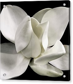 Magnolia Bloom Acrylic Print by David Patterson