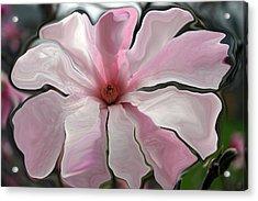 Magnolia Blossom Series 706 Acrylic Print