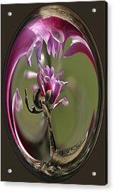 Magnolia Blossom Series 709 Acrylic Print