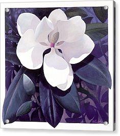 Magnolia Acrylic Print by Blue Sky