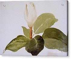 Acrylic Print featuring the painting Magnolia Bud II by Nancy Kane Chapman