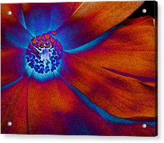 Acrylic Print featuring the photograph Magnolia Electric by Susan Maxwell Schmidt