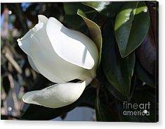 Magnolia Flower Acrylic Print by Jeanne Forsythe