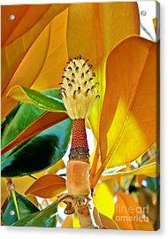 Acrylic Print featuring the photograph Magnolia Flower by Olga Hamilton