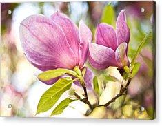 Magnolia Flowers Acrylic Print by Crystal Hoeveler