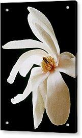 Magnolia II Acrylic Print