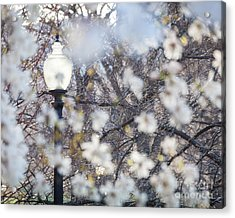 Magnolia Impression 1 Acrylic Print