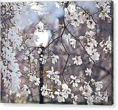 Magnolia Impression 2 Acrylic Print