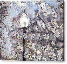 Magnolia Impression Blend Acrylic Print