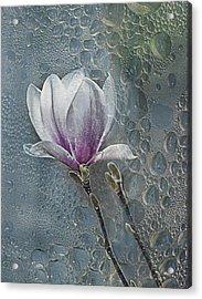 Magnolia Acrylic Print by Joachim G Pinkawa