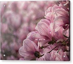 Magnolia Layers Acrylic Print by Rob Amend
