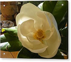 Acrylic Print featuring the photograph Magnolia by Nancy Kane Chapman