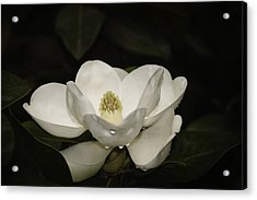 Acrylic Print featuring the photograph Magnolia by Penny Lisowski
