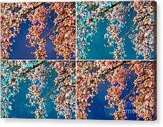 Magnolia Quad Acrylic Print
