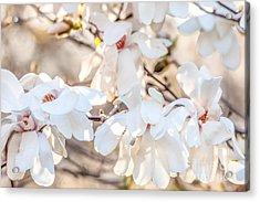 Magnolia Spring 2 Acrylic Print