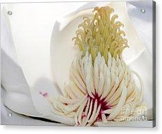 Magnolia Sticky Fingers Acrylic Print by Sabrina L Ryan