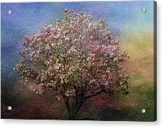 Magnolia Tree In Bloom Acrylic Print