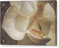 Magnolia Ya Sweet Thang Acrylic Print
