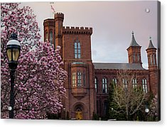 Magnolias Near The Castle Acrylic Print by Andrew Pacheco