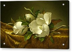 Magnolias On Gold Velvet Cloth Acrylic Print by Martin Johnson Heade