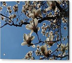 Magnolias Acrylic Print by Rita Haeussler