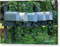 Mailboxes And Ivy Acrylic Print