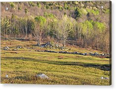 Maine Blueberry Field In Spring Acrylic Print