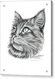 Maine Coon Acrylic Print by Barb Baker