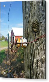 Maine Electric Fence Acrylic Print by Melissa C