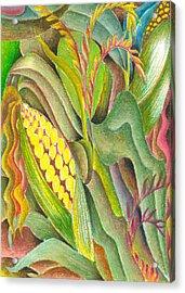 Maize Acrylic Print by Jaanaka Kandepola