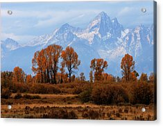Majestic Backdrop Acrylic Print by David Andersen