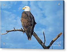 Majestic Acrylic Print by Bob Hislop
