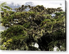 Acrylic Print featuring the photograph Majestic Branches by Davina Washington