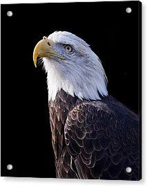 Majestic Eagle Acrylic Print