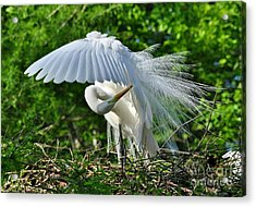 Acrylic Print featuring the photograph Majestic Egret by Kathy Baccari