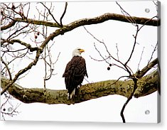 Acrylic Print featuring the photograph Majestic I by Trina  Ansel