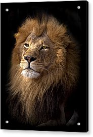 Majestic In Color Acrylic Print